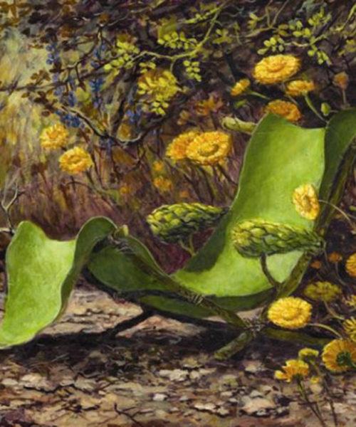 Lounge Among Desert Marigolds