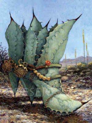 Agave Countr